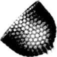 Diatomee_-_Diatom_(fossile)_50Kx40